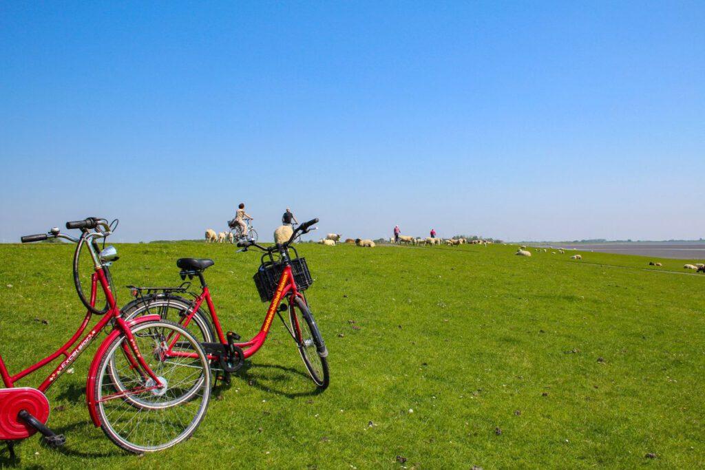 Destination Buesum Radfahren Umfrage Gaeste 2020